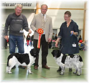 Sandcroft's Golda Fraukje Of Alger & N DK UCH DKV-12 Sandcroft's Fraukje Mira Of Rimme
